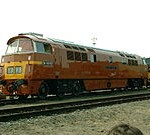D1015 Western Champion